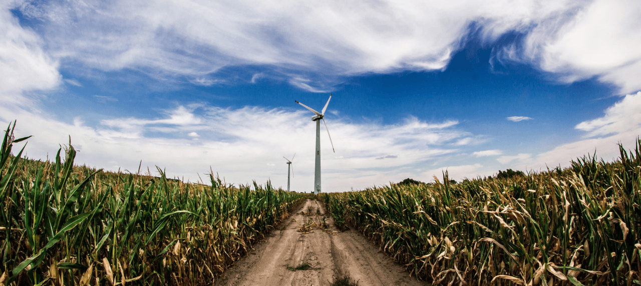 A responsabilidade do empresariado quanto a proteção do Meio Ambiente