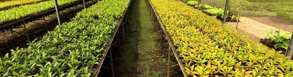Todo produtor de mudas e sementes deve se registrar no RENASEM?