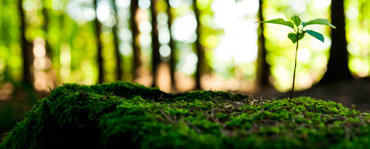 Gestão Ambiental: conceitos importantes