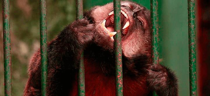 Maltratar animais é crime ambiental?