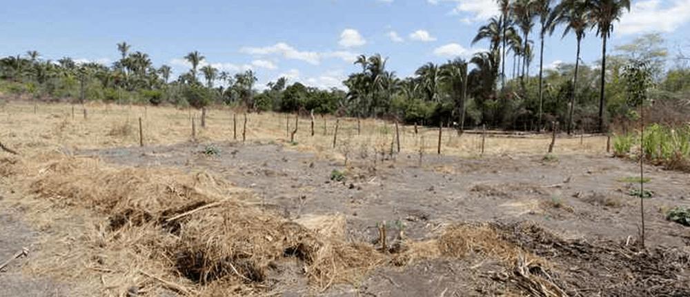 Veredas de Guimarães Rosa agonizam no interior de Minas Gerais (EM)