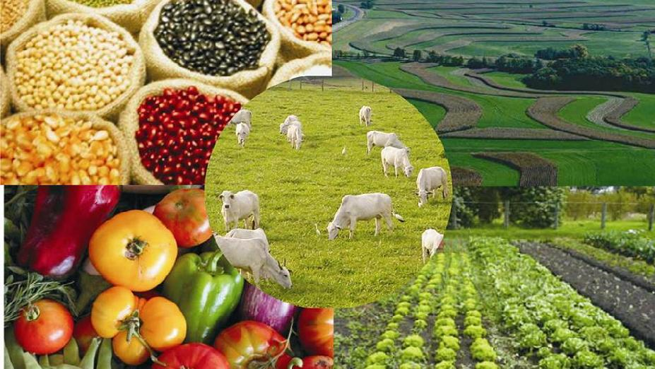 Segurança de alimentos, certificações e regulamentação do setor agropecuário brasileiro.