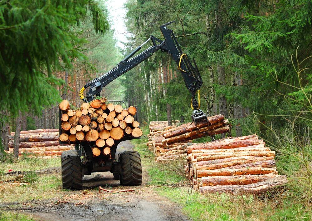 Saiba como o desmatamento vai ser identificado como legal ou ilegal